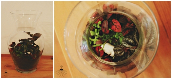 Little Miss Lovely Terrariums Berlin MD Florist (7)