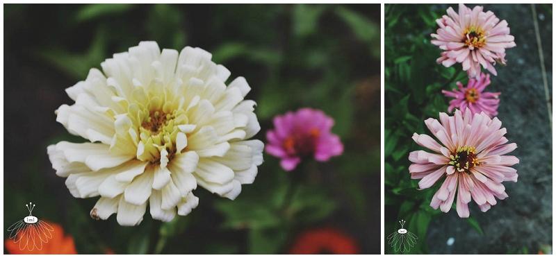 little miss lovely - flower grower