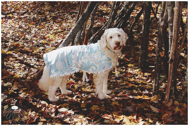 little miss lovely large dog coat jacket DIY cute labradoodle tutorial sewing 017