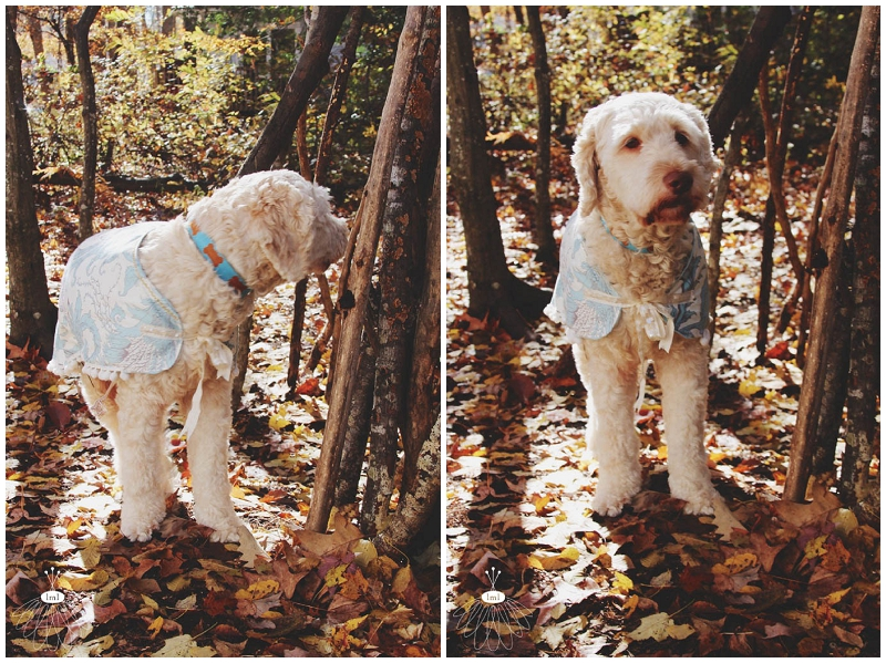 little miss lovely large dog coat jacket DIY cute labradoodle tutorial sewing 018