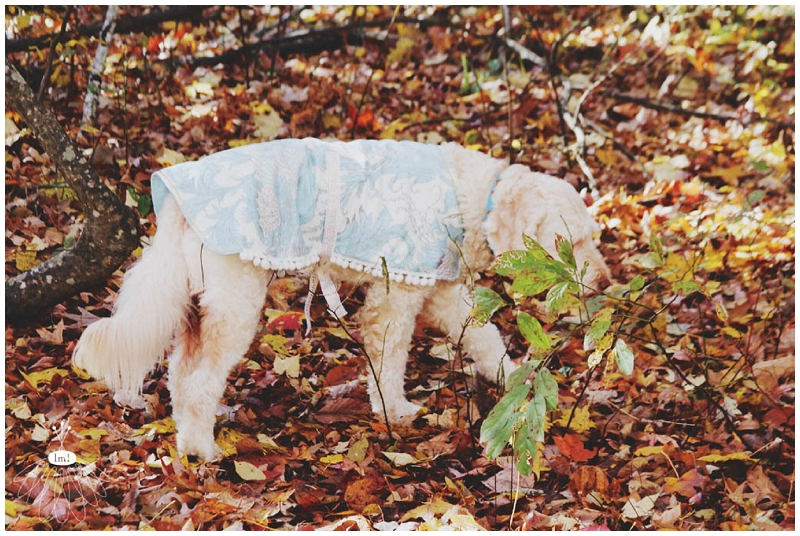 little miss lovely large dog coat jacket DIY cute labradoodle tutorial sewing 019
