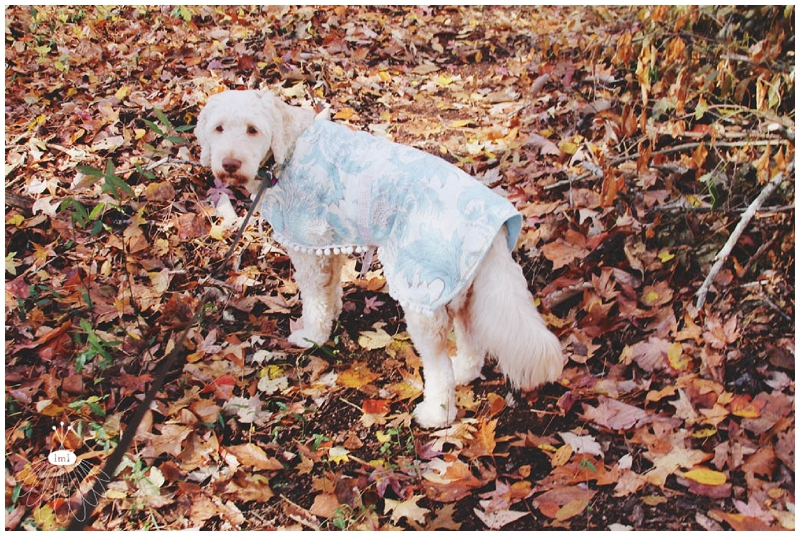 little miss lovely large dog coat jacket DIY cute labradoodle tutorial sewing 020