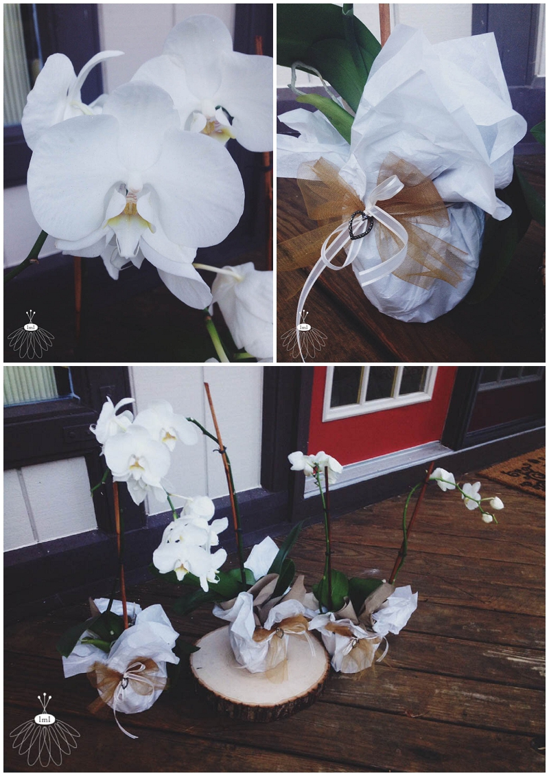 sympathy tribute flowers potted orchids - little miss lovely ocean pines berlin md