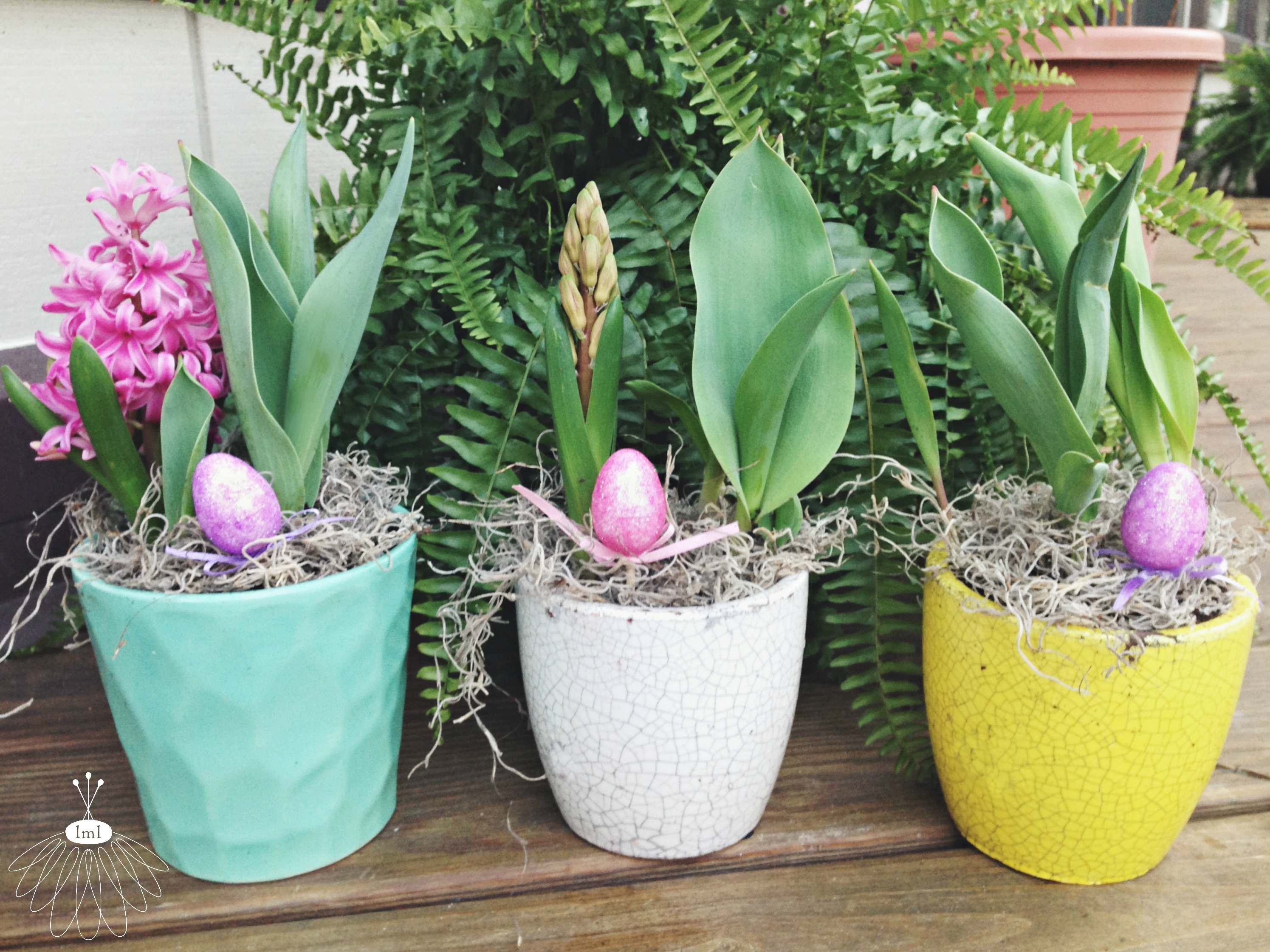 little miss lovely // potted Easter bulbs
