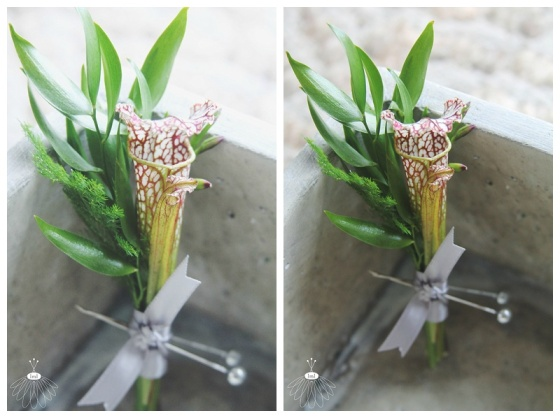 little miss lovely floral design // minimalist pitcher plant boutonniere // carnivorous wedding flowers